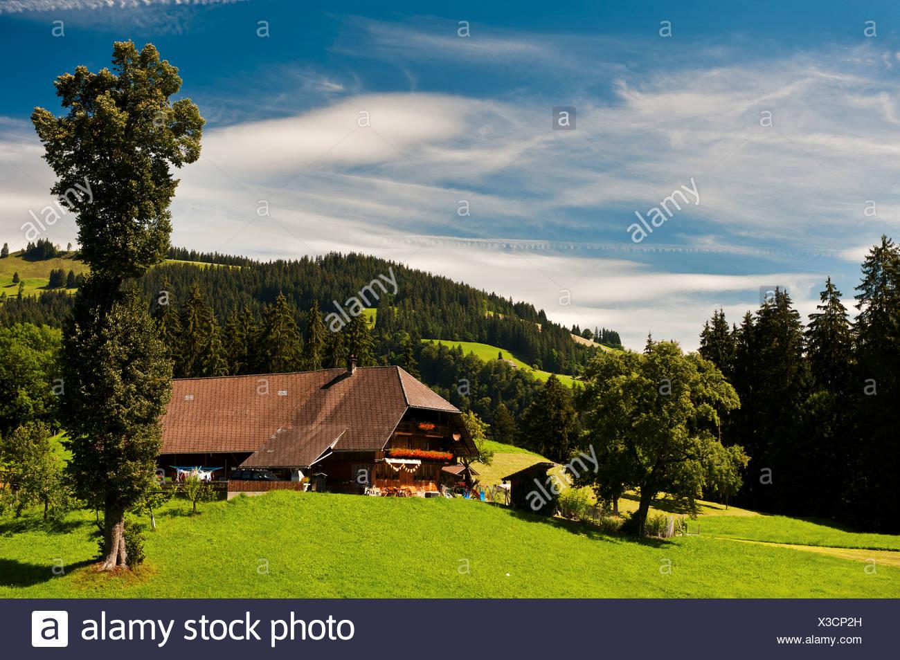 farm, farm house, farmstead, grassland, mountain farmer, Emmental, canton Bern, landscape, scenery, agriculture, farming, Switze - Stock Image