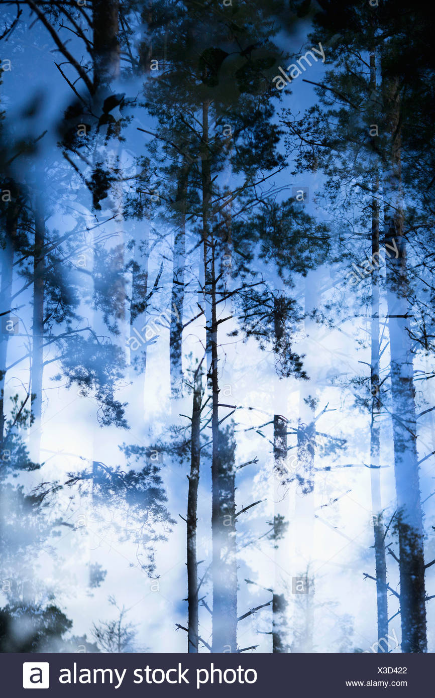 Blurred view of trees in forest - Stock Image