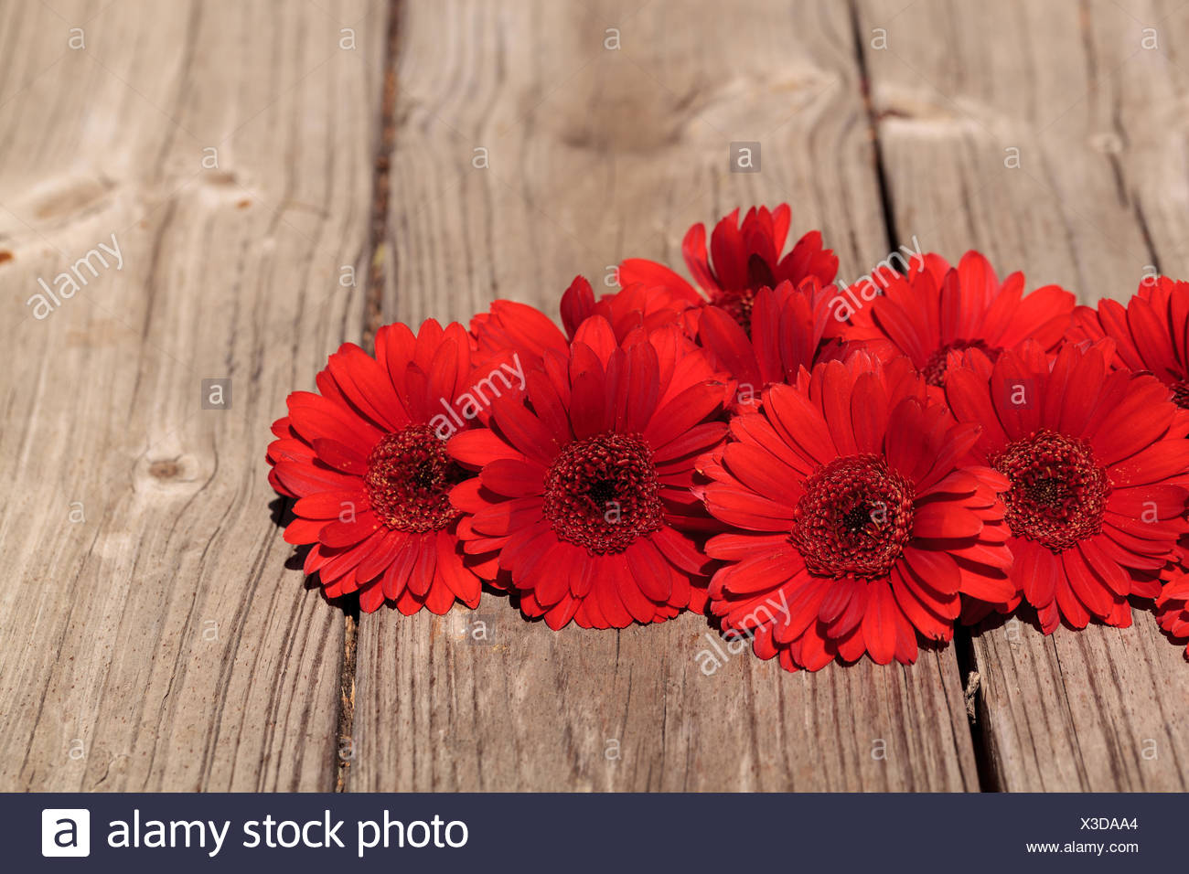 Red gerbera daisies clustered on a rustic wood picnic table ...