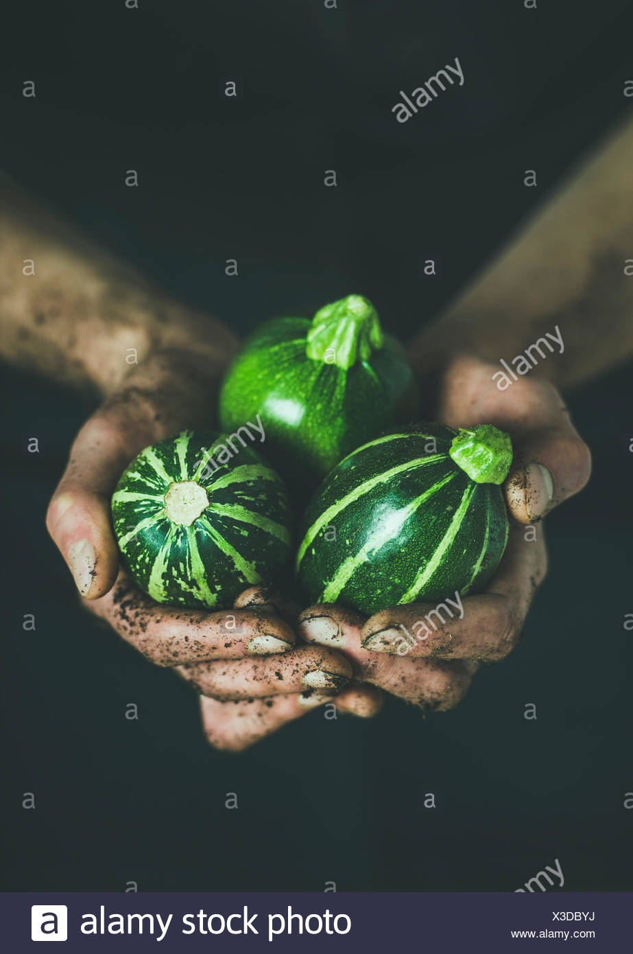 Man wearing black clothing holding fresh seasonal green round zucchinis in his dirty hands at local farmers market. Gardening, farming and natural foo - Stock Image