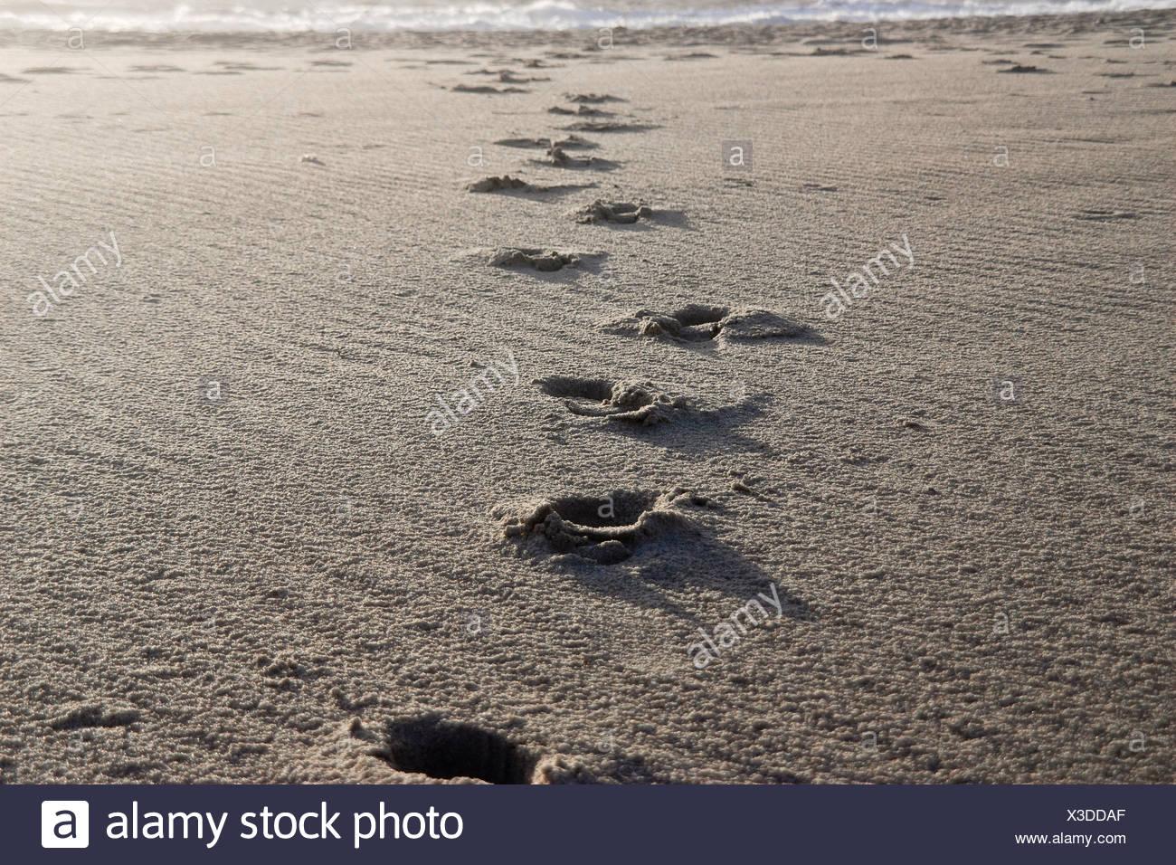Denmark, Vrist, Footsteps on wet beach - Stock Image