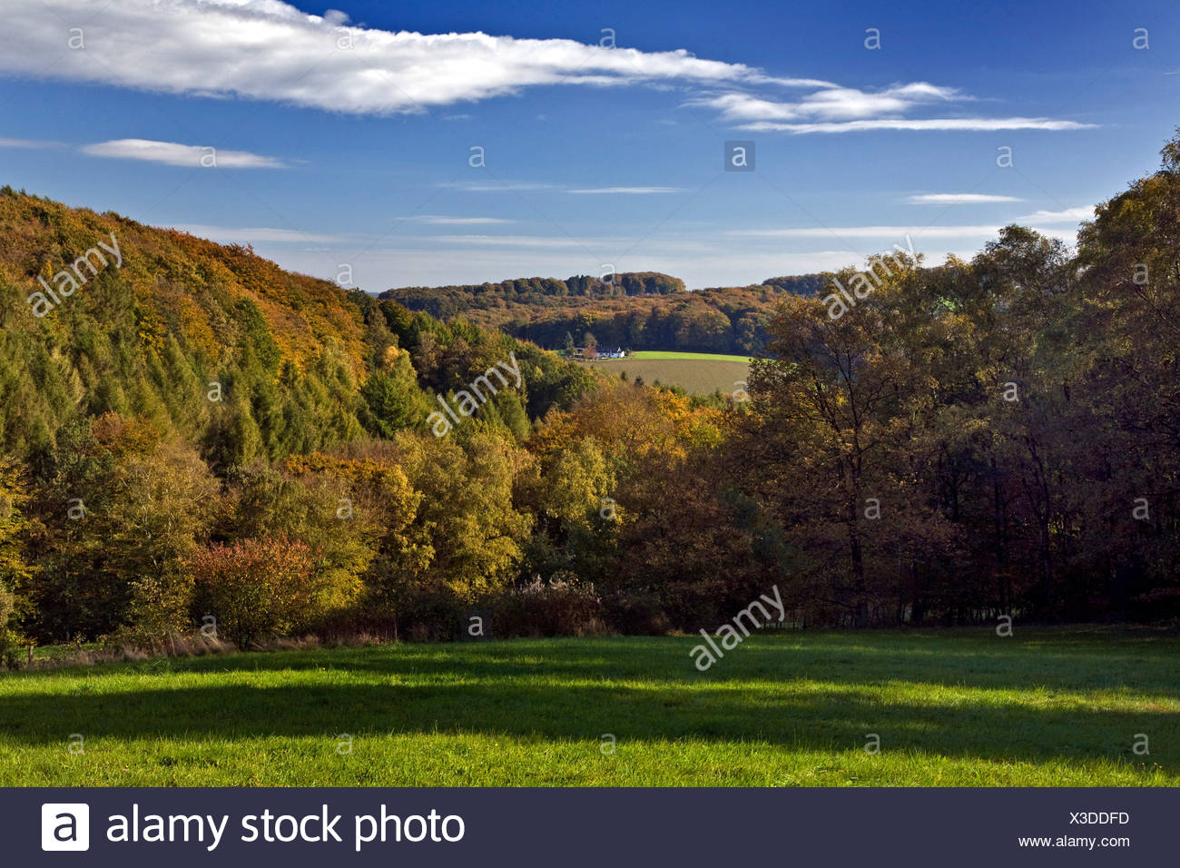 view over landscape of the  Elfringhauser Schweiz in autumn, Germany, North Rhine-Westphalia - Stock Image