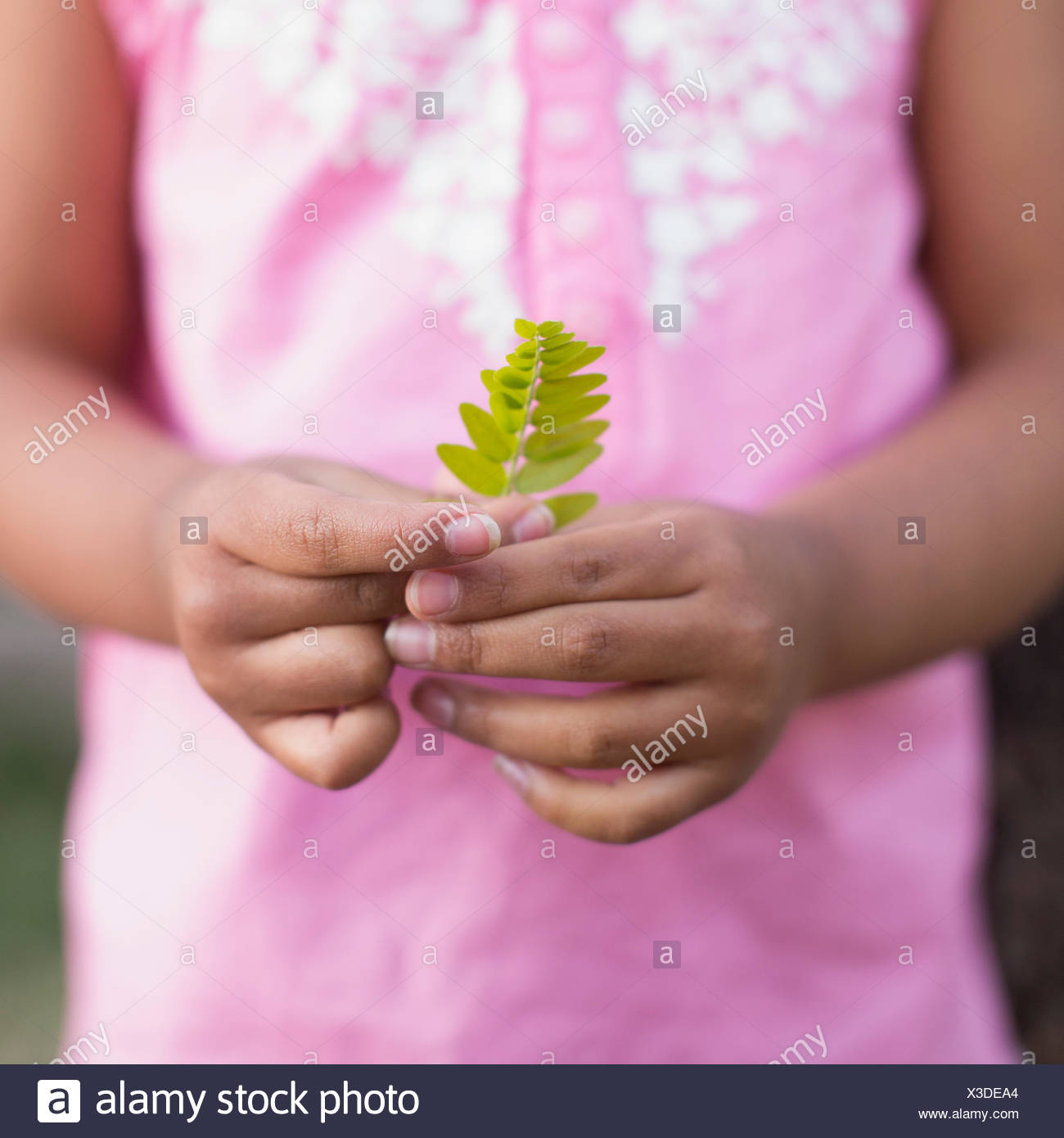 A child, a girl in a pink shirt holding a small fern leaf in her hands. - Stock Image