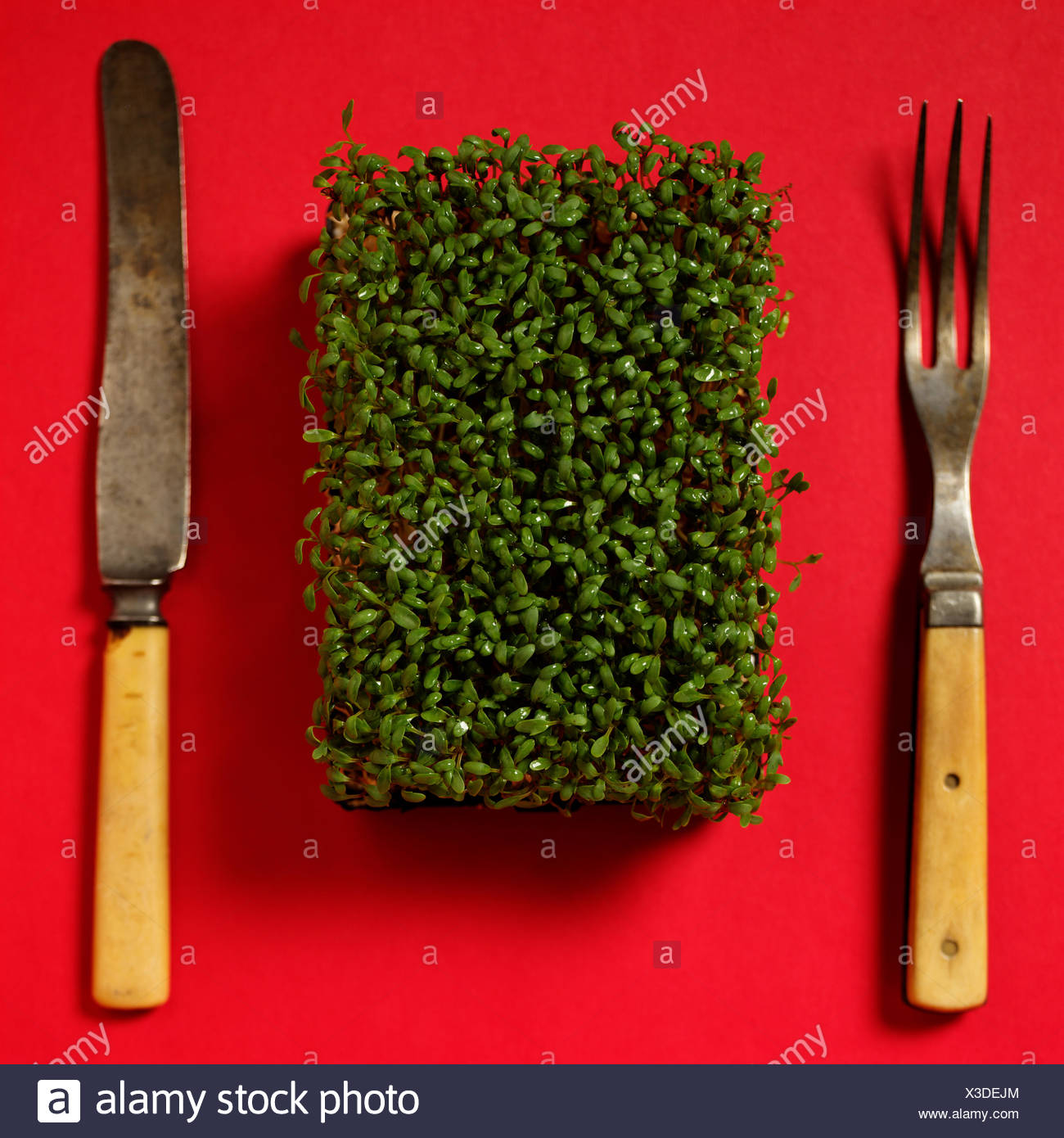 Still Life of Garden Cress with Knife and Fork. - Stock Image