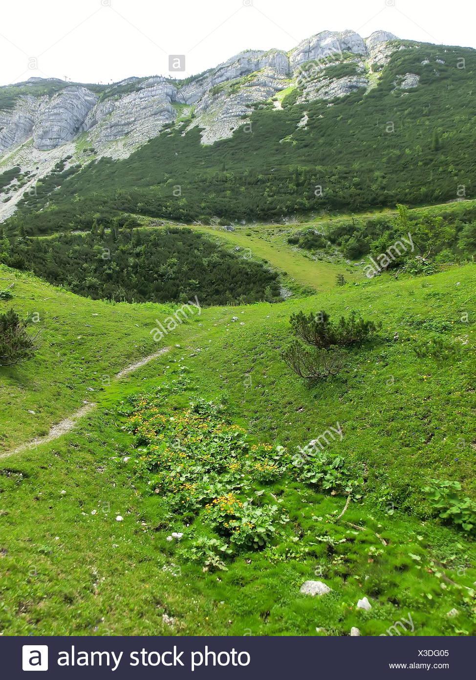 mountains, green, rock, lower austria, meadow, mountain, grass, lawn, tree, Stock Photo