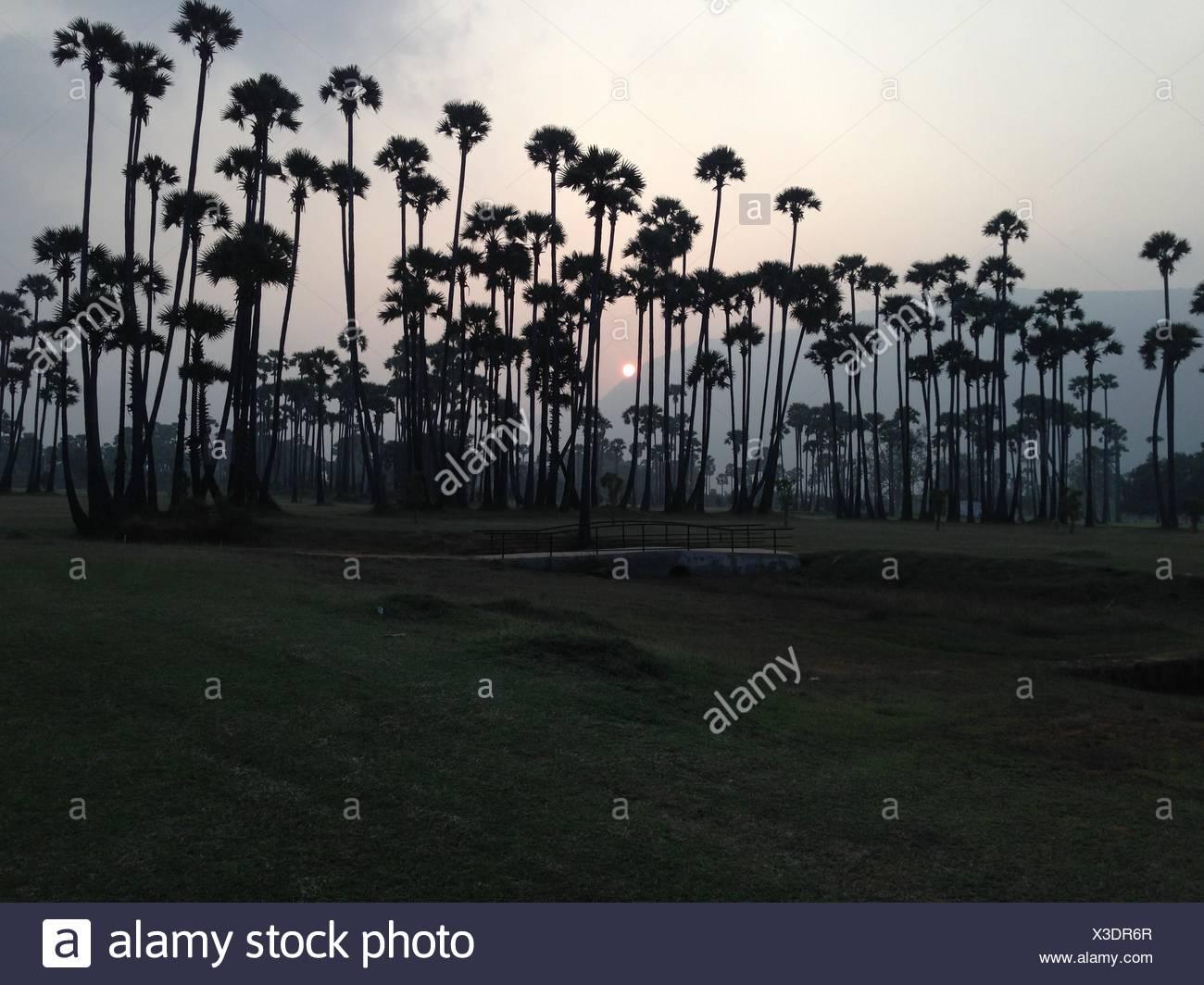India, Andhra Pradesh, Sunset - Stock Image