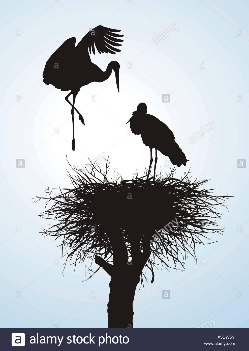 Betrothal storks - Stock Image