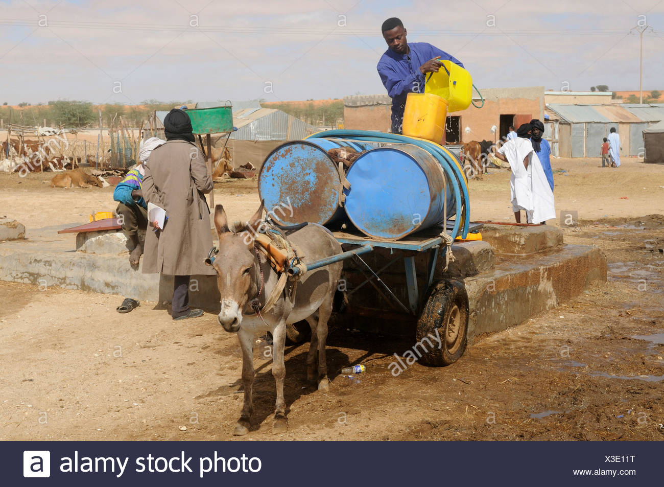 Man filling water into water containers on top of a donkey cart, Nouakchott, Mauritania, northwestern Africa - Stock Image