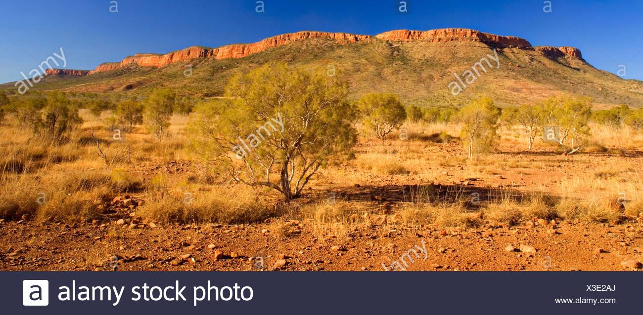 Mt. Cockburn Range - bushland and sandstone cliffs of the Mount Cockburn Range, which extends along the famous Gibb River Road, in the Heart of the Kimberleys, Australia, Western Australia, Kimberley, East Mount Cockburn Range - Stock Image