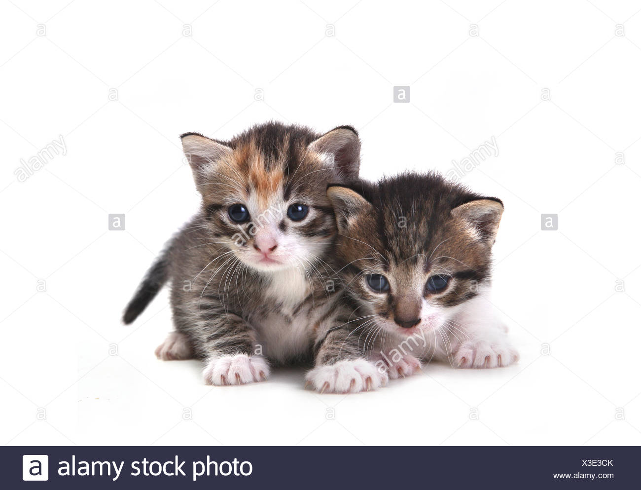 Cute Newborn Baby Kittens Easily Isolated On White Stock Photo Alamy