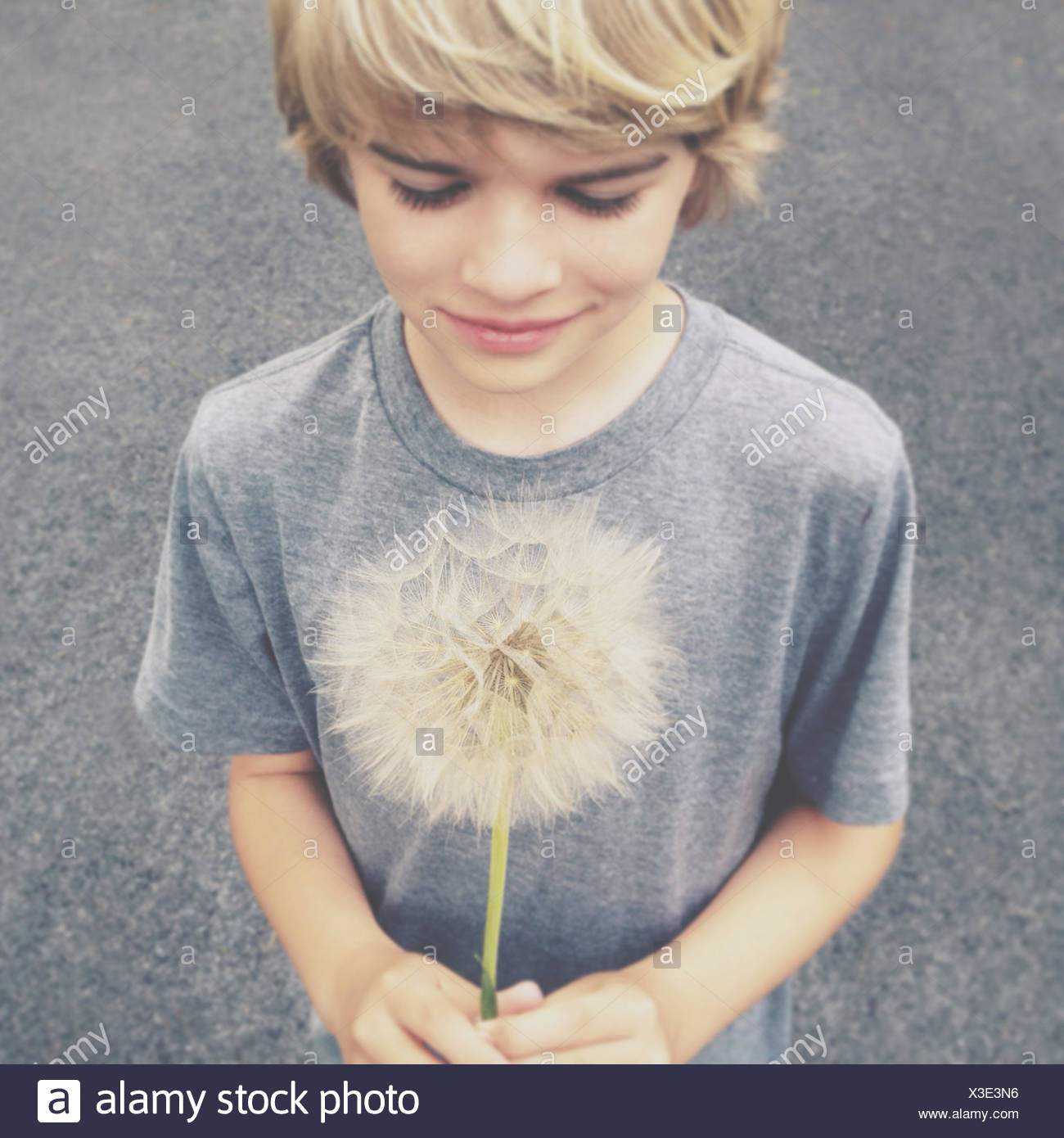 Blonde boy holding giant dandelion - Stock Image