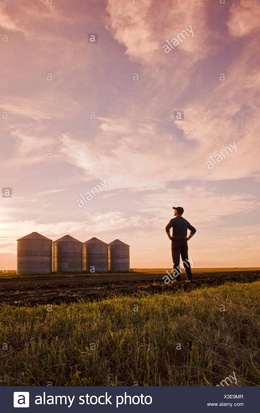 a farmer looks out over grain storage bins/silos at sunset,near Carey, Manitoba, Canada - Stock Image