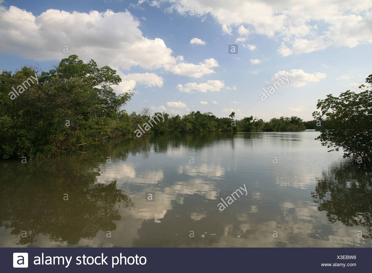 Rookery Bay National Estuarine Research Reserve, Florida, USA - Stock Image