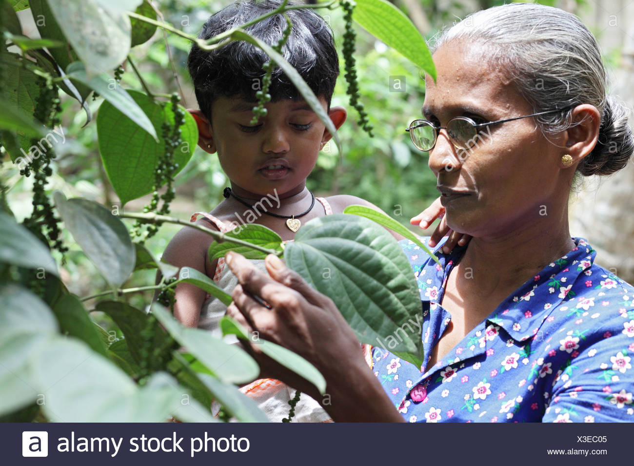 Ambalangoda, Sri Lanka, woman with a baby in her arms in front of a pepper tree - Stock Image
