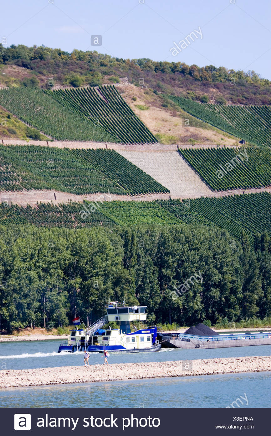 Germany, Boppard, barge on river Rhine below vineyards - Stock Image