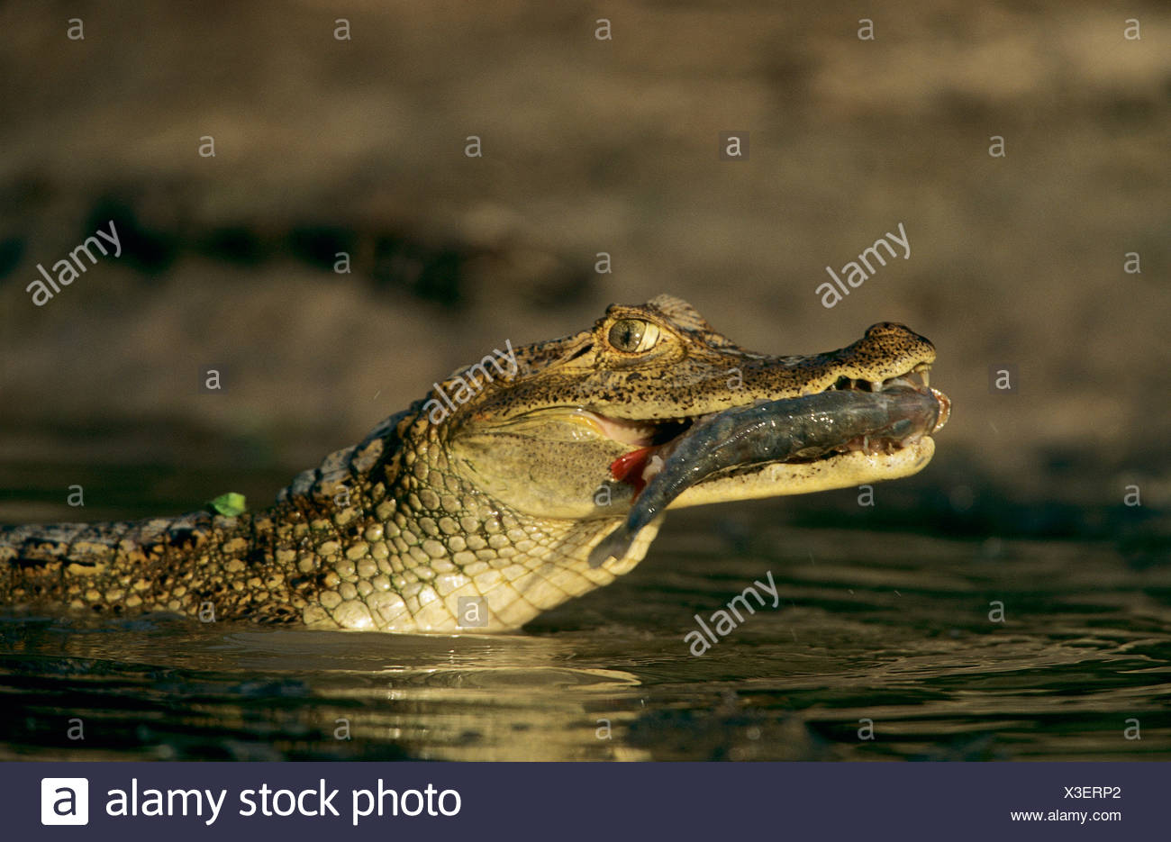 Großzügig Brief Ein Alligator Malvorlagen Bilder - Malvorlagen-Ideen ...