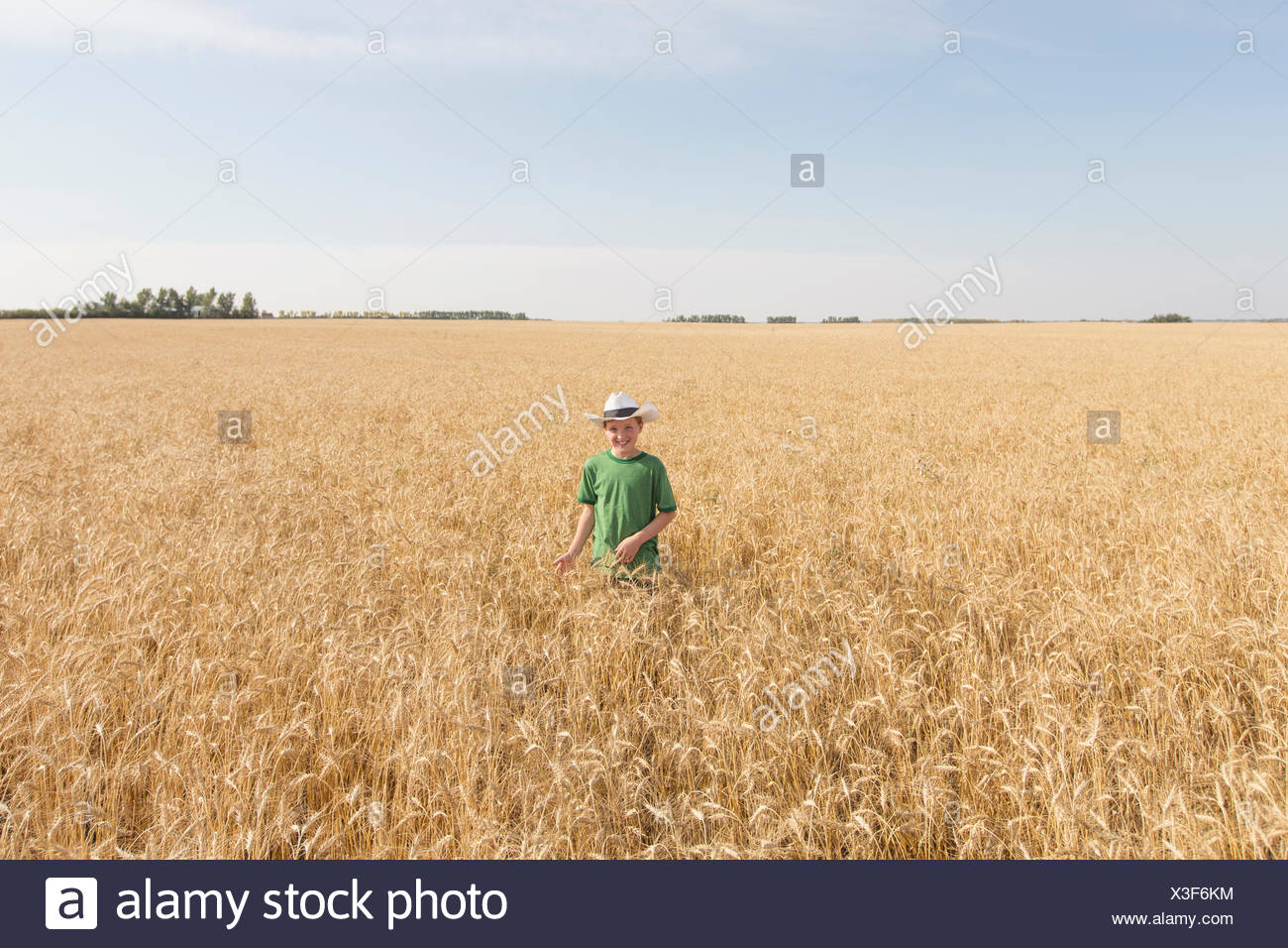 Young boy standing in wheat field. - Stock Image