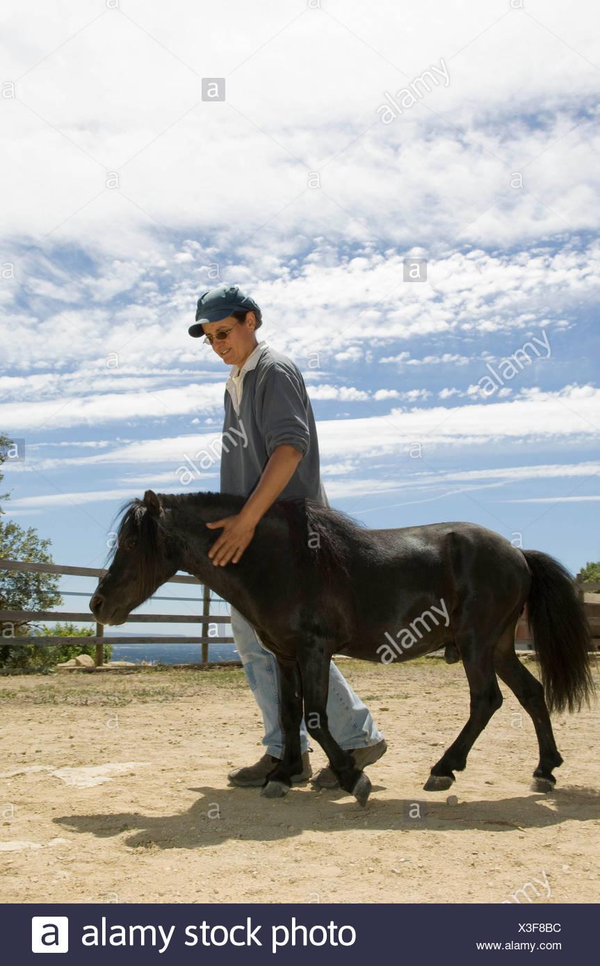 Trainer walking miniature horse - Stock Image