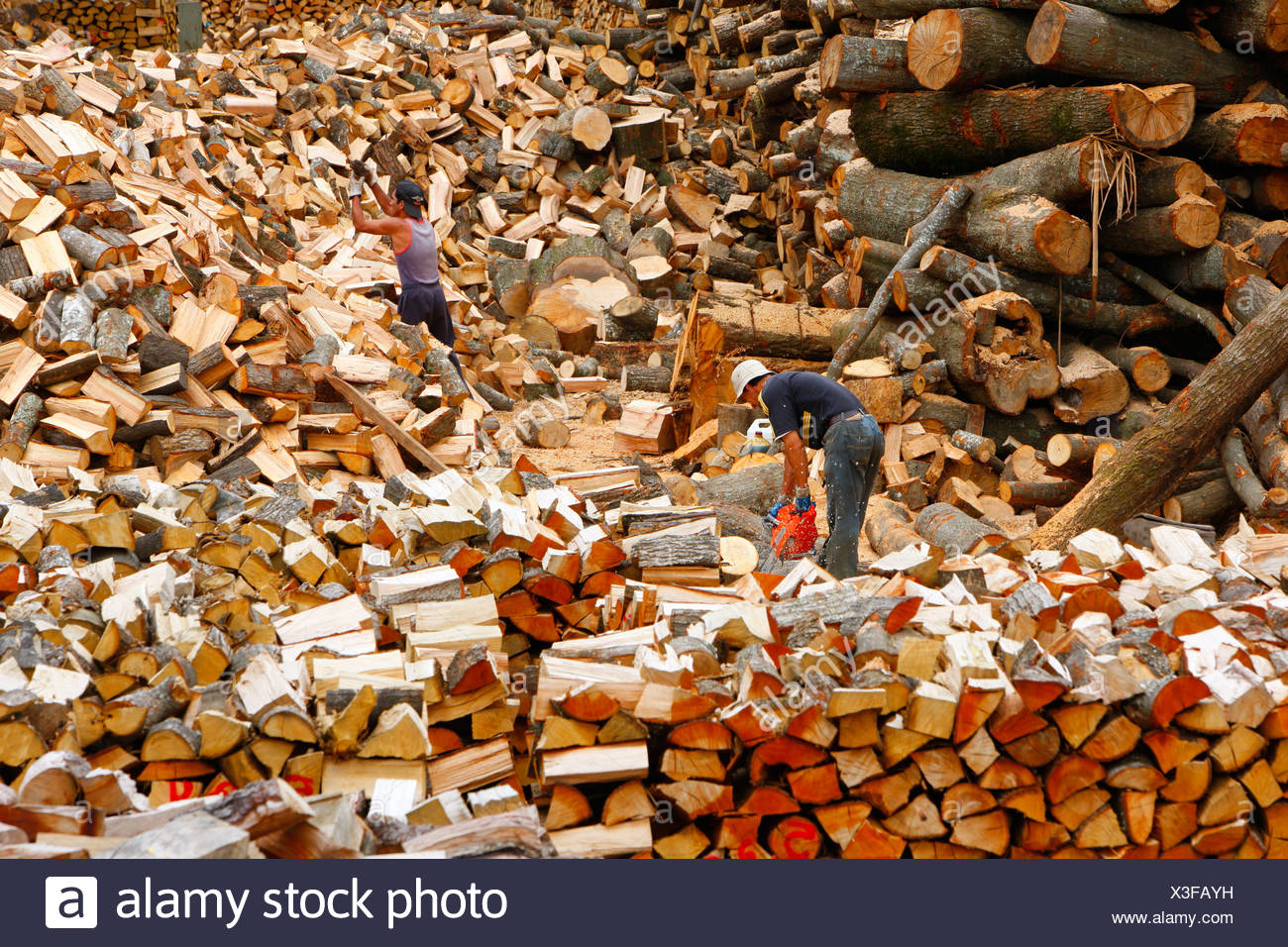 Firewood, Bio-Bio region, Chile, South America Stock Photo