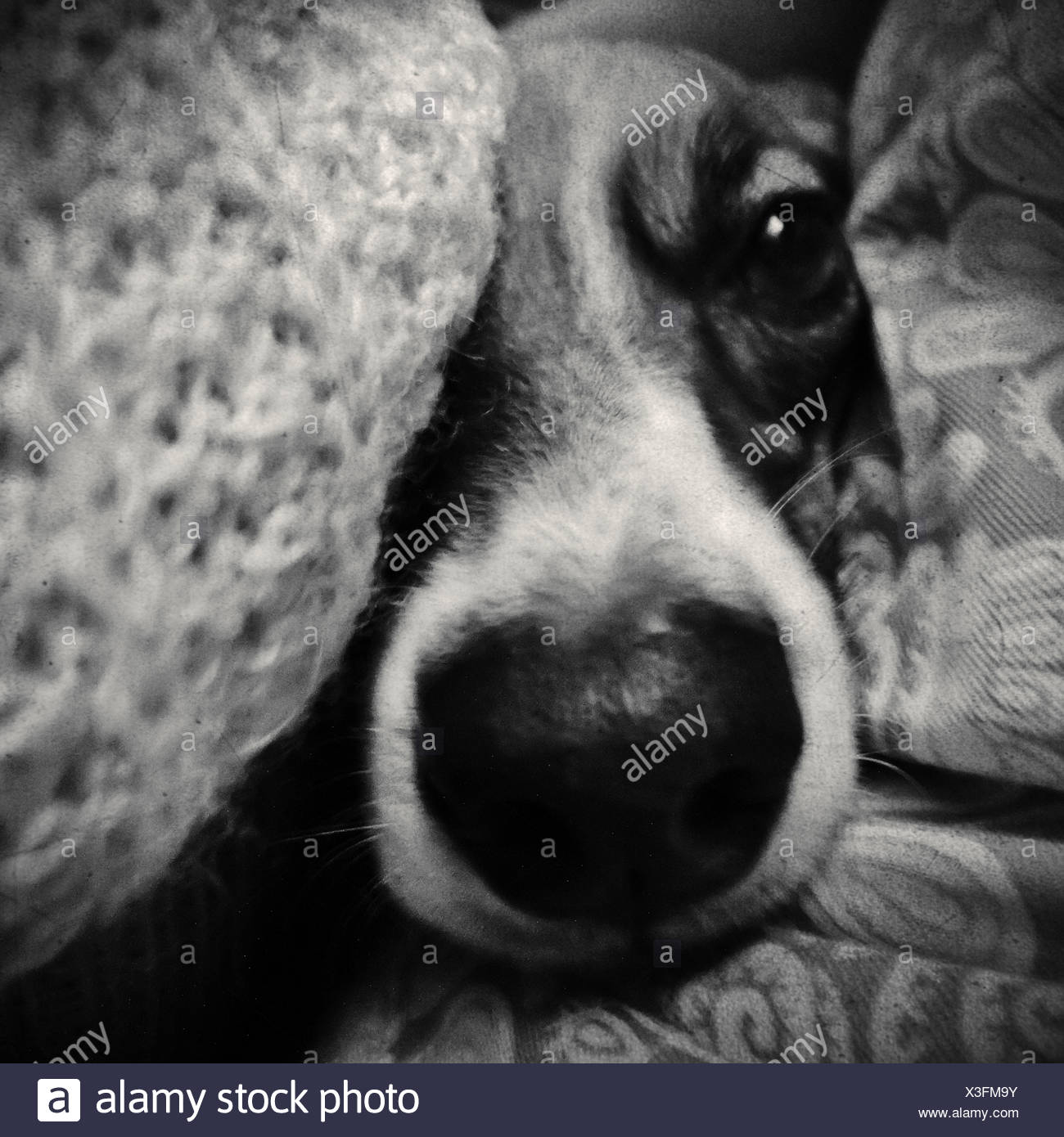 Close up portrait of a dog face - Stock Image