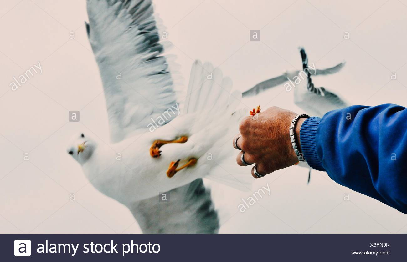 Close-Up Of Hand Feeding Bird - Stock Image