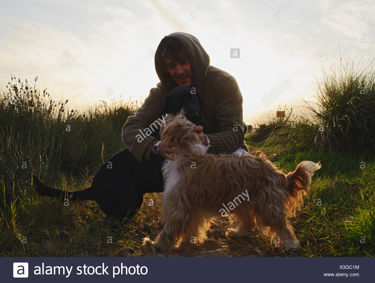 A Man With His Two Dogs - Stock Image