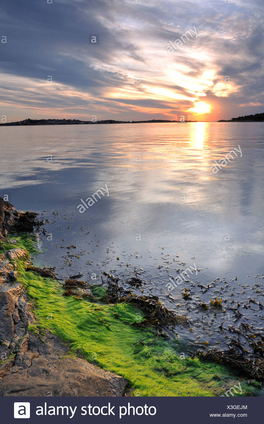 Seaweed at the waterline - Stock Image