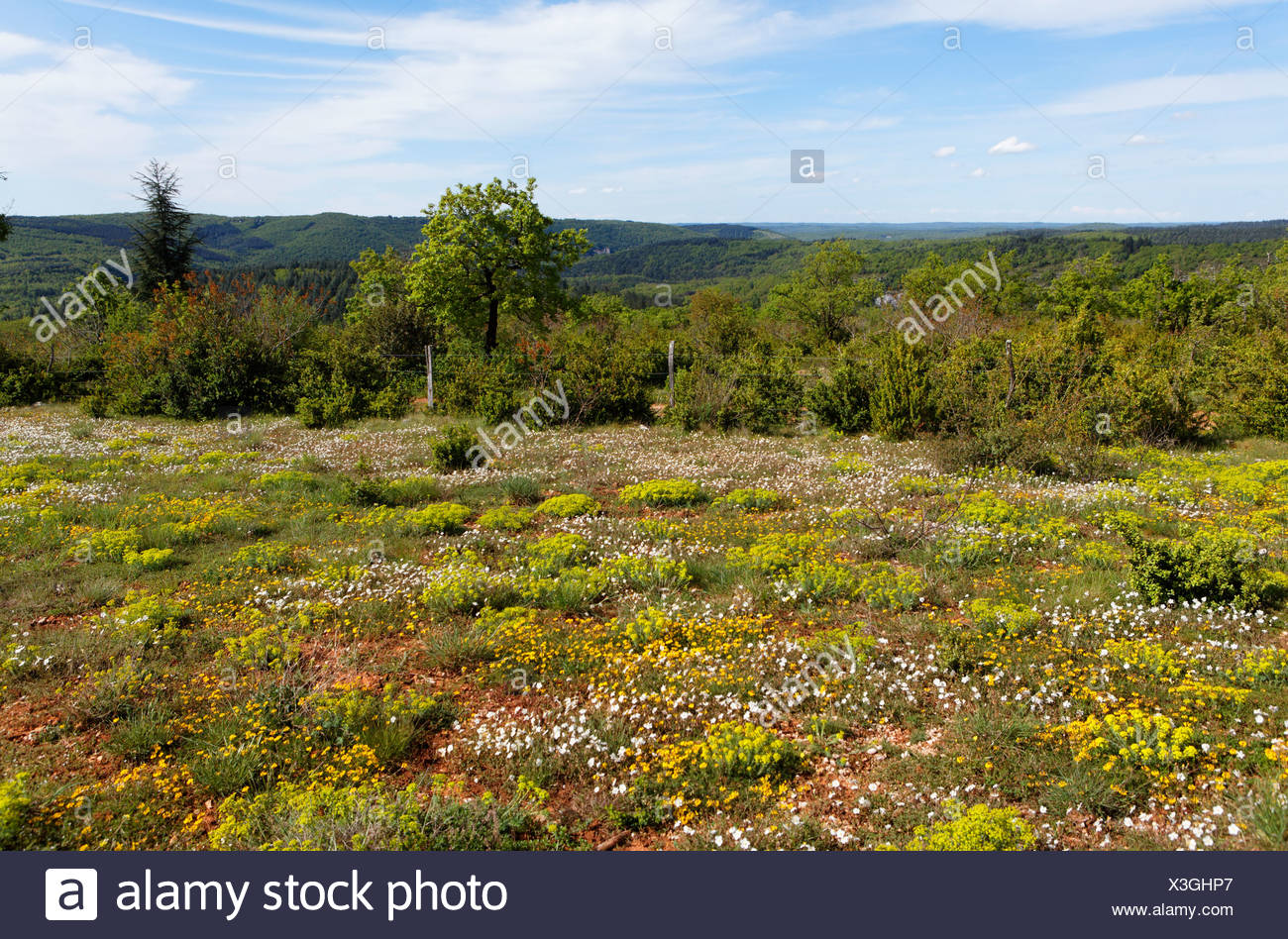 Spring landscape, Causse near Cabrerets, Quercy, Lot, France, Europe - Stock Image