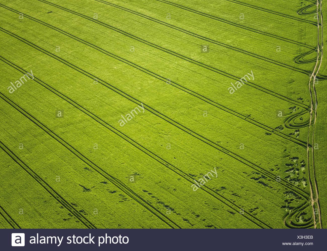 Getreidefeld im Fruehjahr, Luftaufnahme Stock Photo