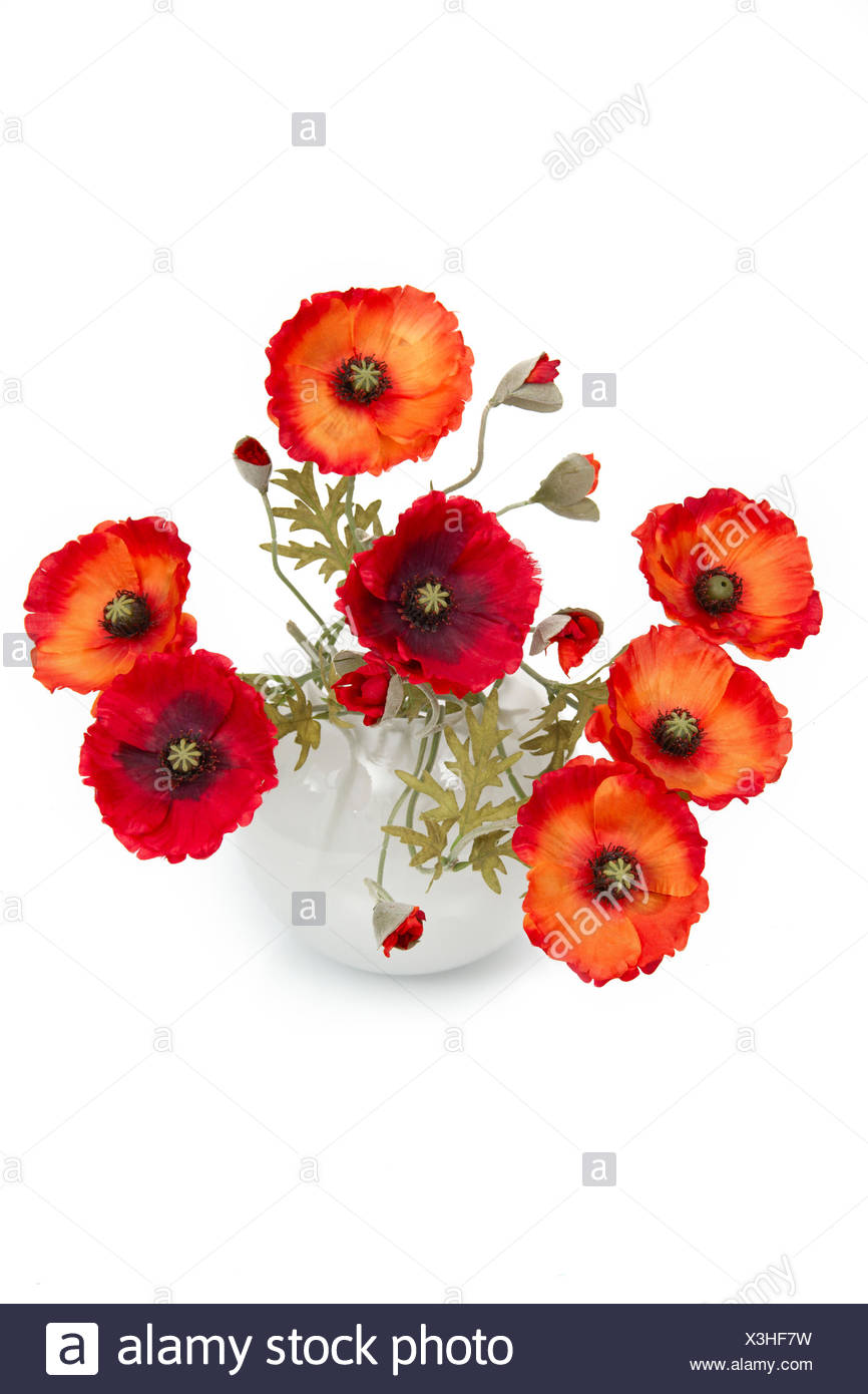 Top Red Poppies In Vase In Stock Photos & Red Poppies In Vase In Stock  ZD84