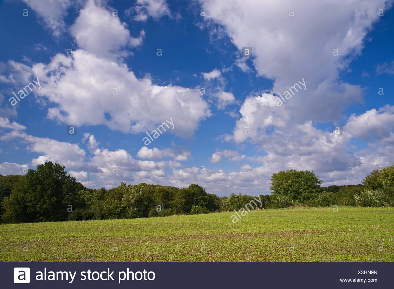 Germany, Schleswig - Holstein, field, Stock Photo