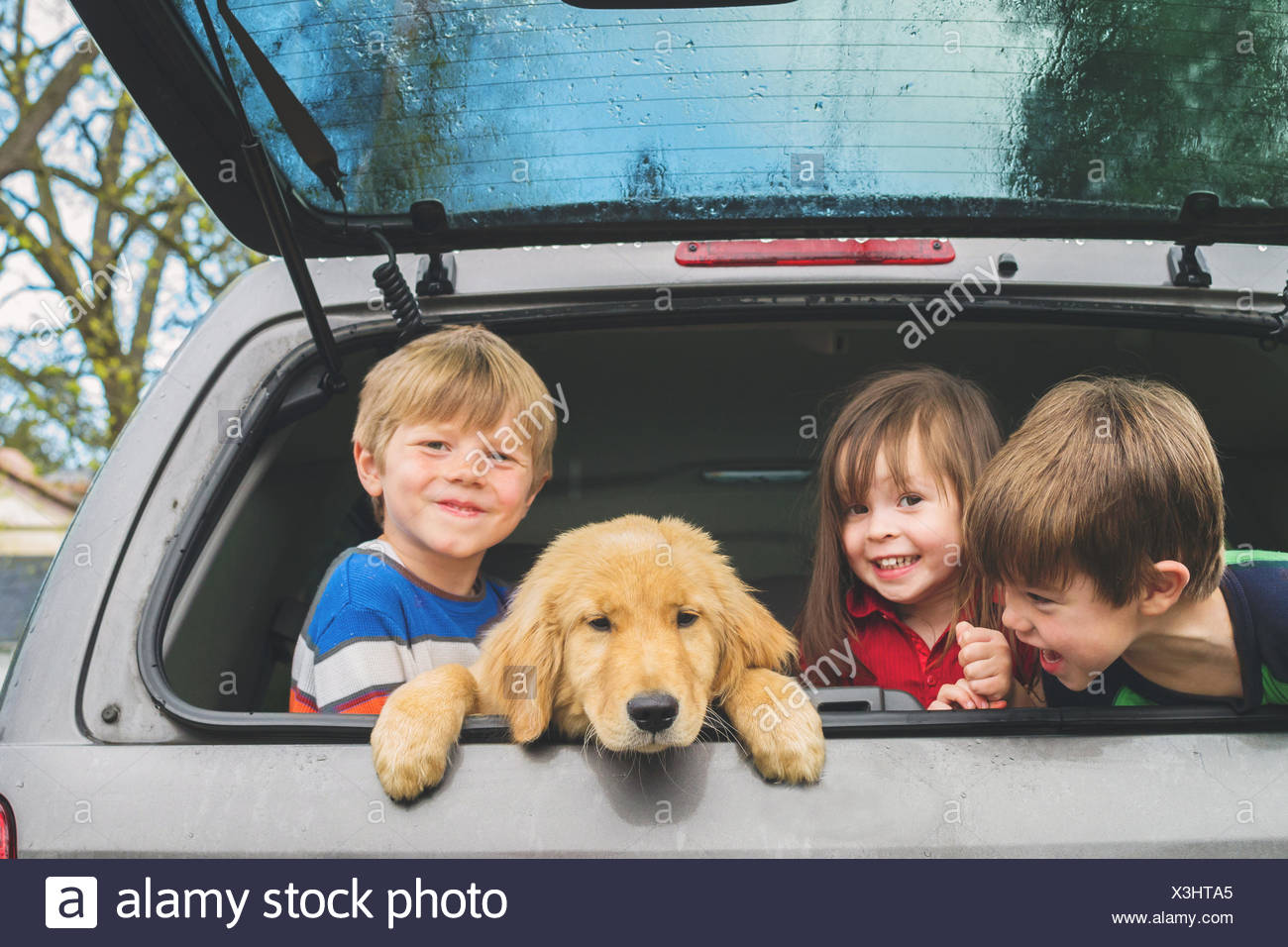 Three children in the back of vehicle with new puppy - Stock Image