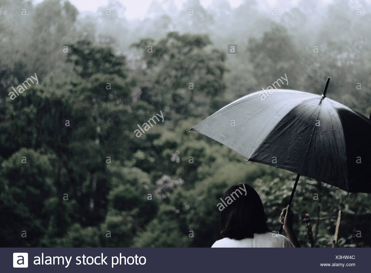 Rear View Of Woman With Umbrella With Trees In Background Stock Photo