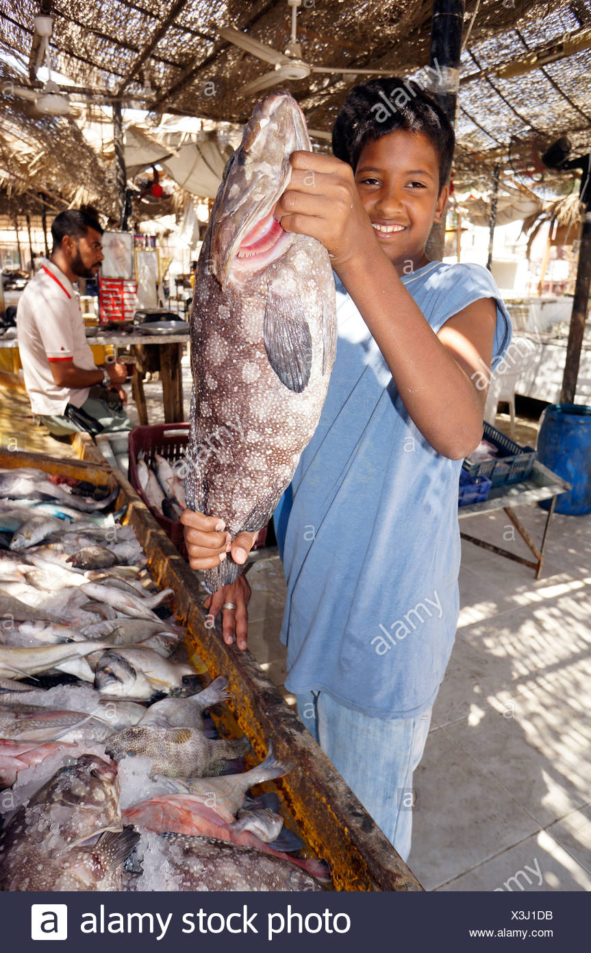 groupers (Epinephelus spec.), young fishmonger presenting a grouper at the sales booth, Egypt, Hurghada - Stock Image