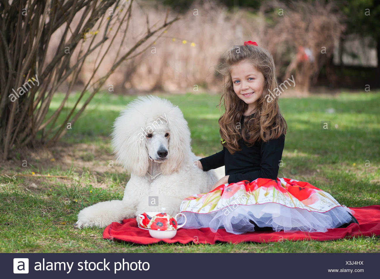 Portrait of girl (6-7) and white poodle on picnic blanket - Stock Image