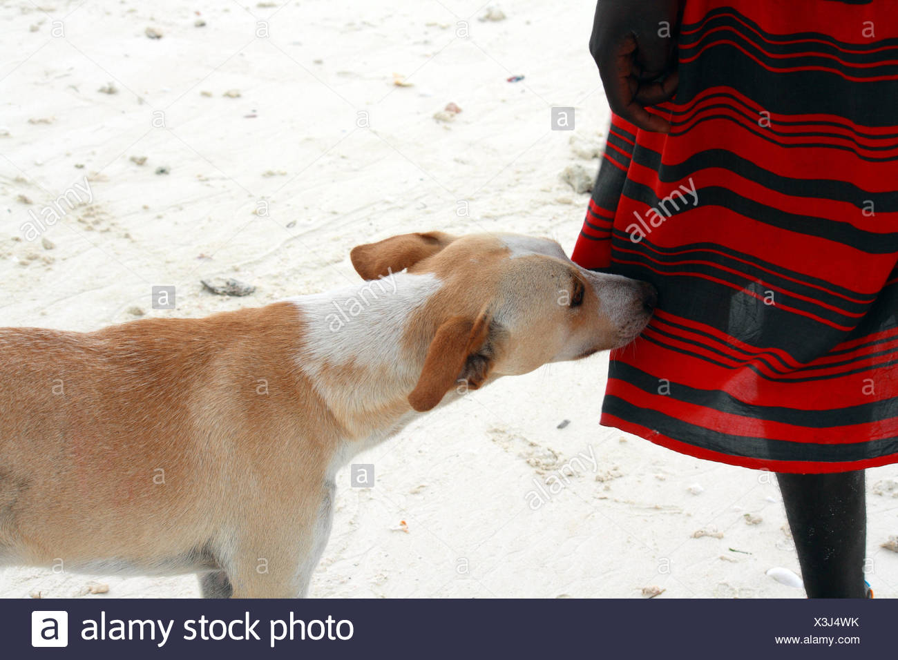 africa, dog, leg, tunic, boy, lad, male youngster, friend, man, profile, hand, - Stock Image