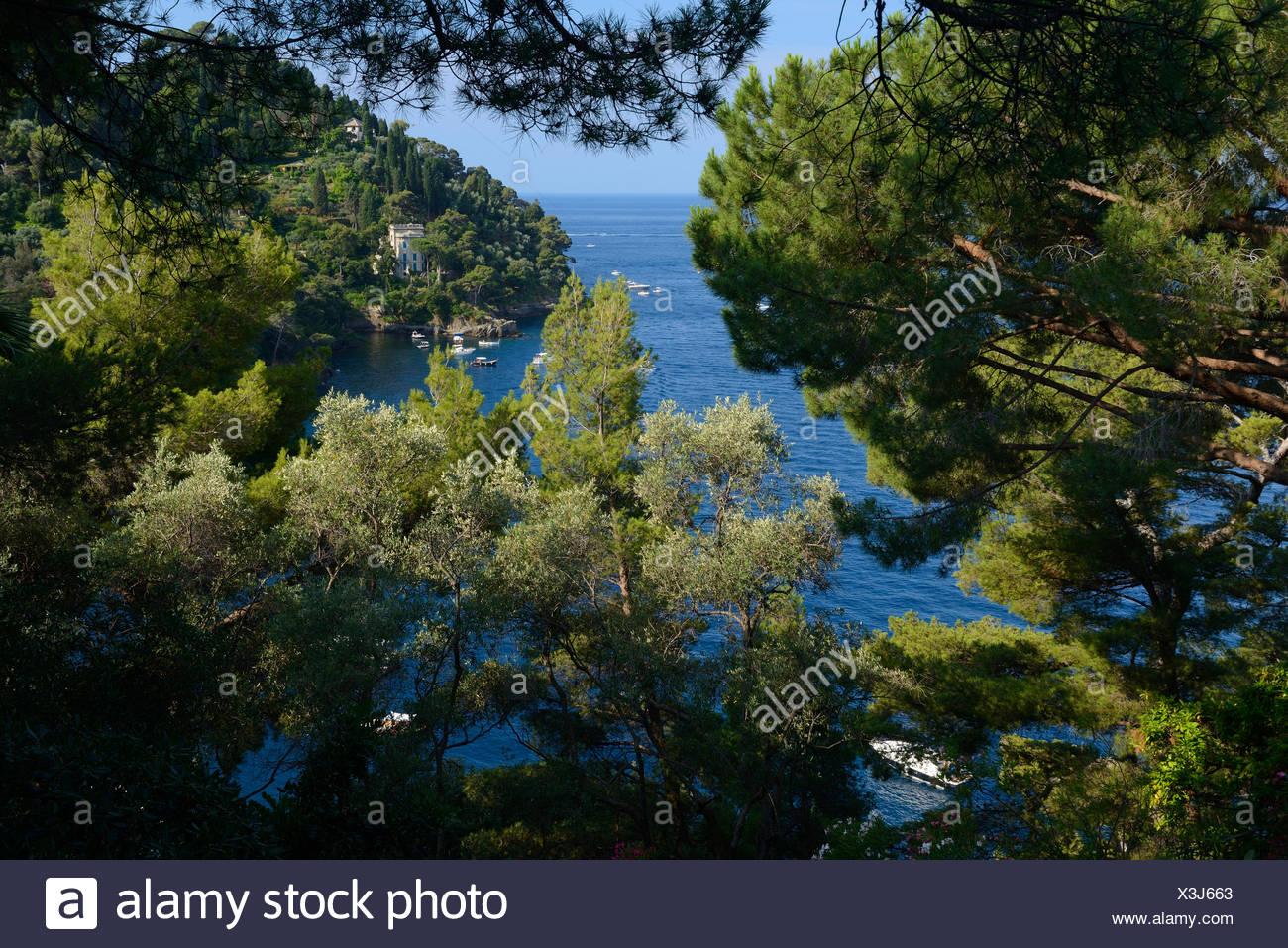 Italy, Riviera, Genoa province, Portofino, Mediterranean, tree, sea, - Stock Image