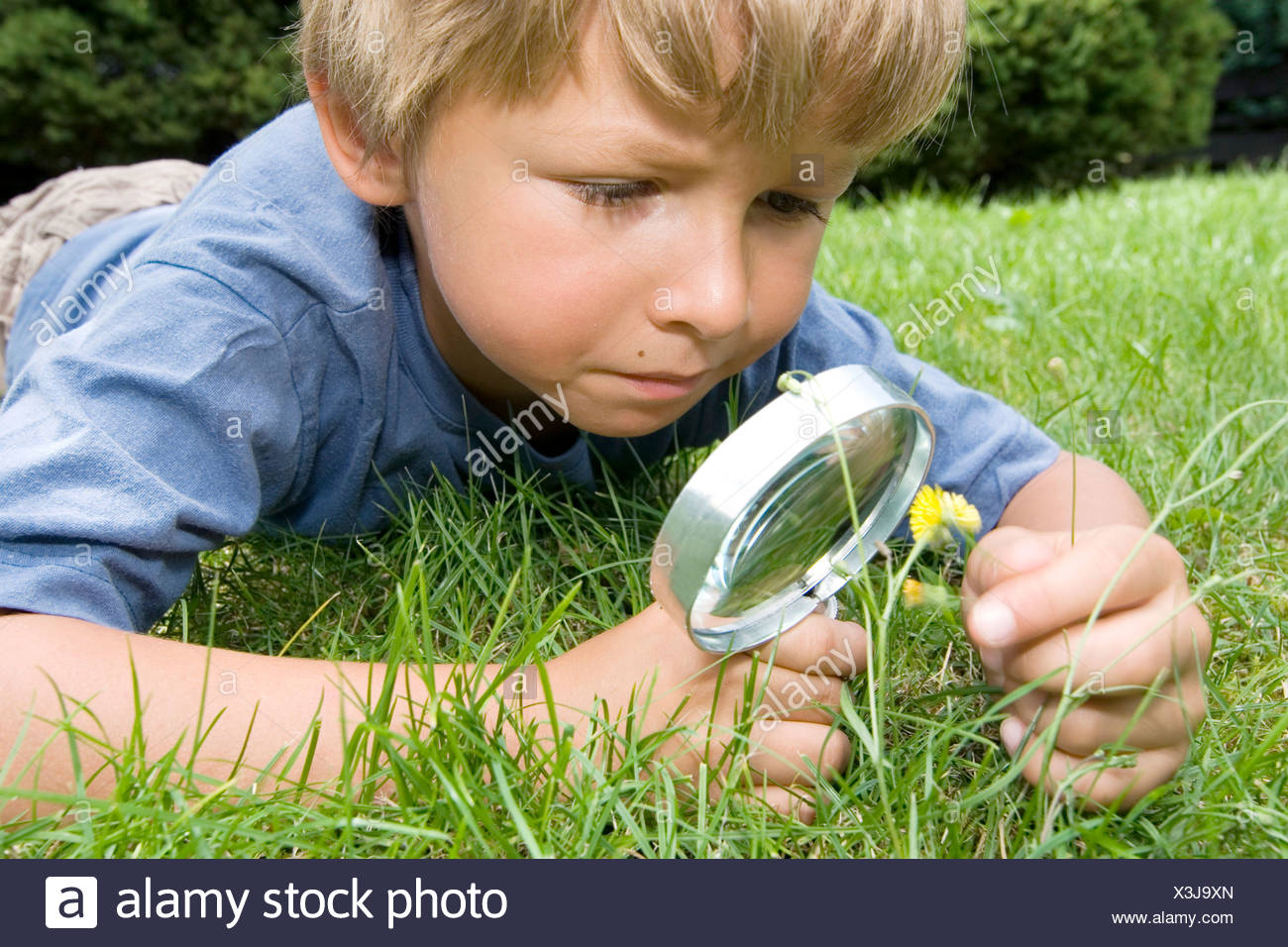 Boy examining a flower with a magnifying glass - Stock Image