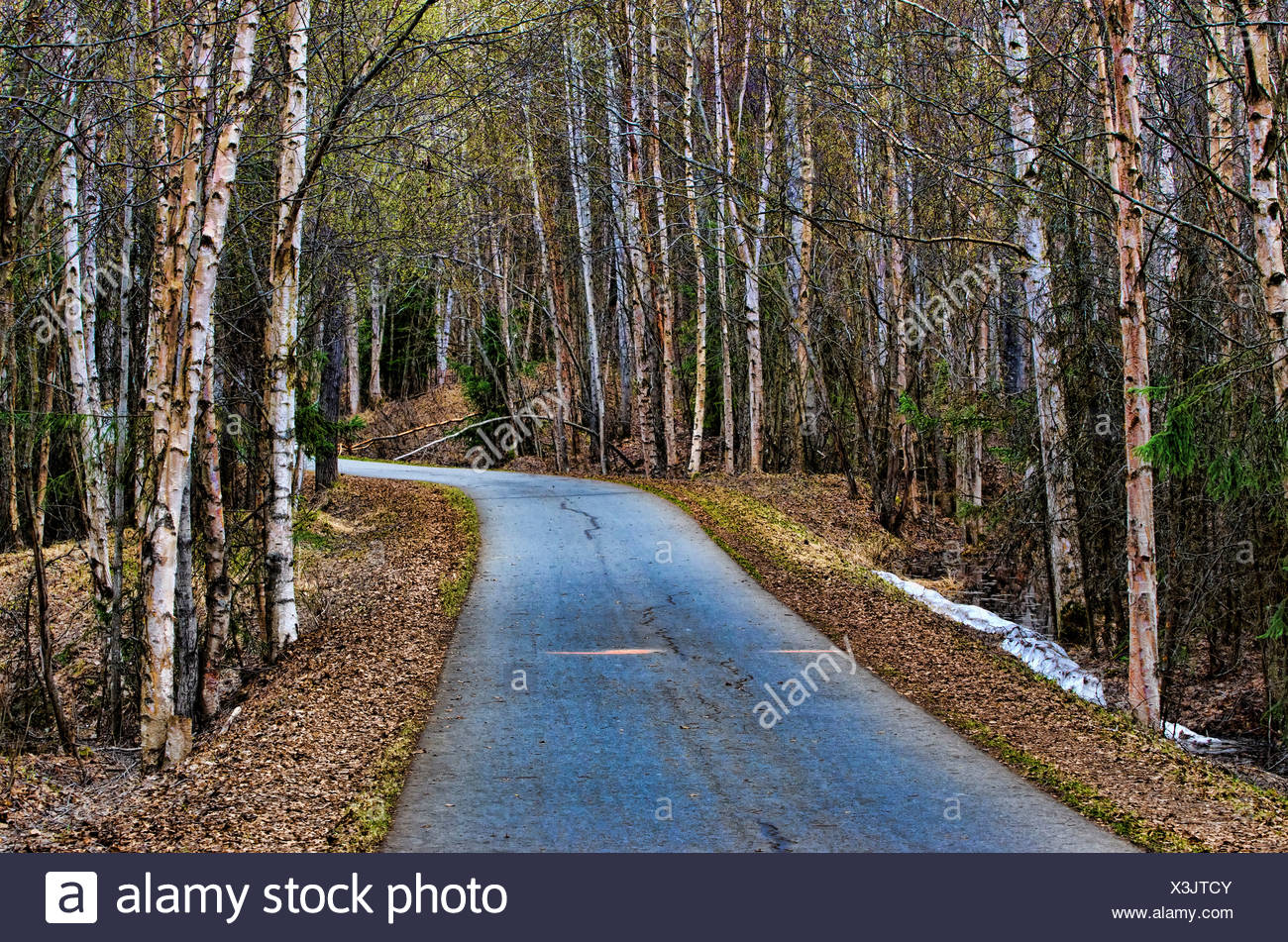 anchorage coastal trail, Alaska, USA, United States, America, road, forest, autumn - Stock Image