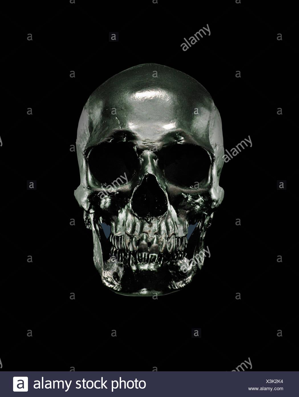 Metal model of human skull - Stock Image