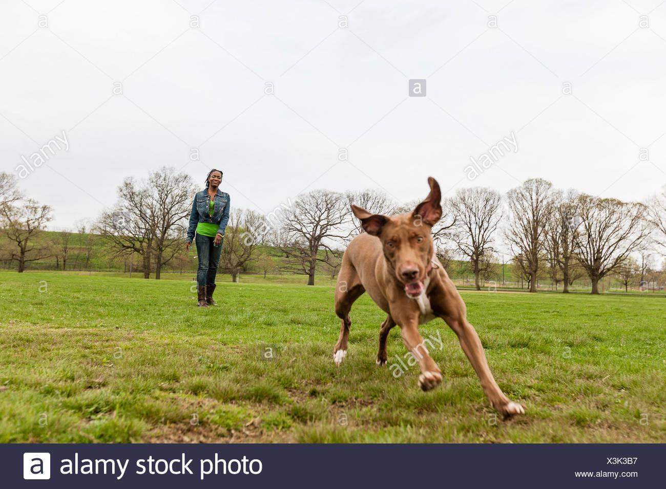Dog running across grass - Stock Image