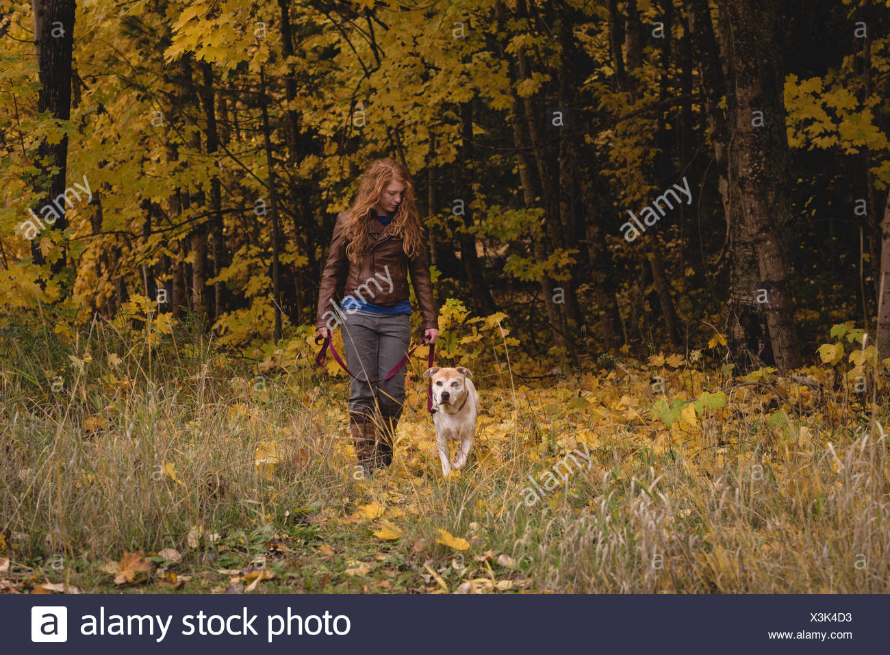 Woman walking in autumn forest with pet dog - Stock Image