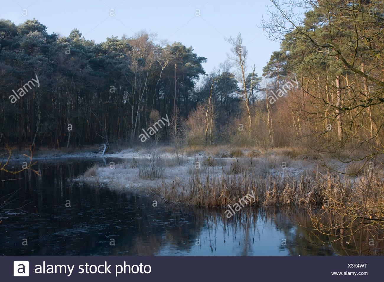 Winters ven en gemengd bos in Kampsheide - Stock Image