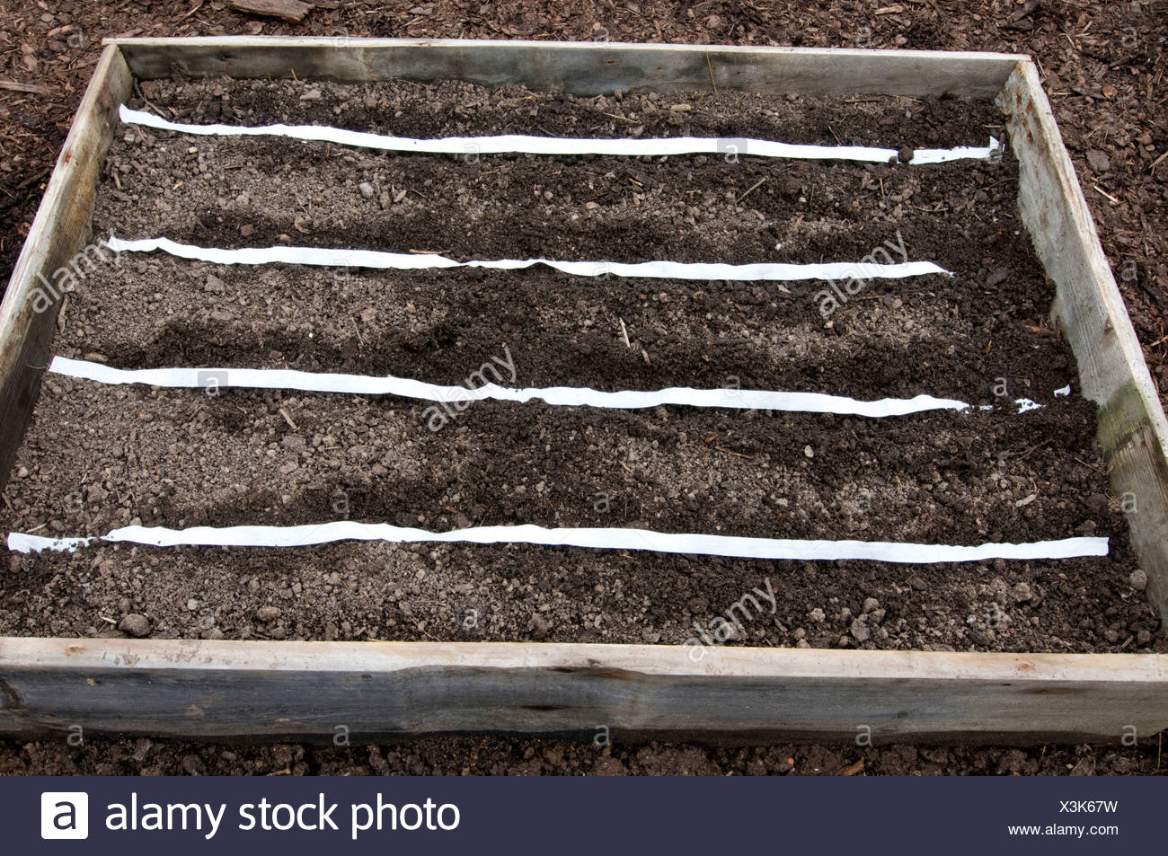 Seed strip - Stock Image