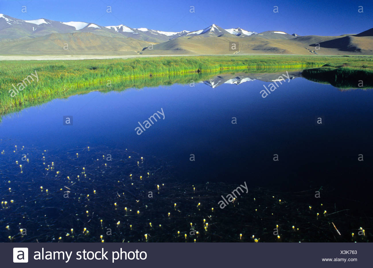 Lake Kar Tso, grassy plateau and snow-covered peaks, elevation of over 4900 metres, Himalayas, Ladakh, India - Stock Image