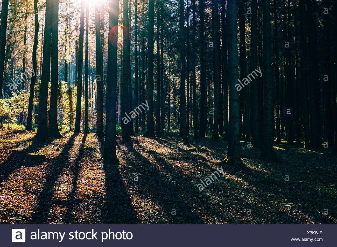 Trees Growing In Forest - Stock Image