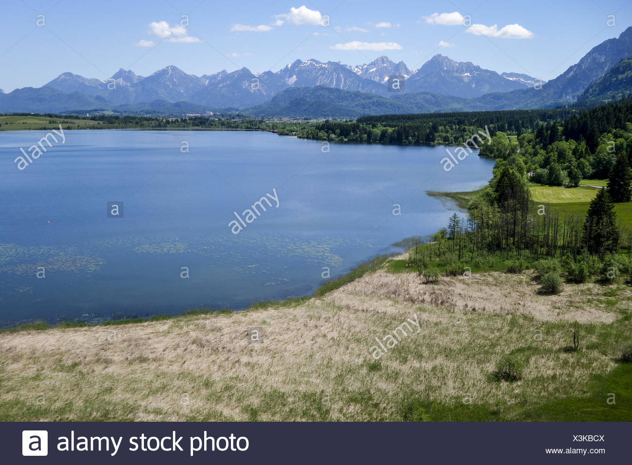 Blick auf den Bannwaldsee im Ostallgäu, Königswinkel, Tannheimer Alpen, Overlooking the Bannwaldsee in Ostallgaeu, Koenigswinkel - Stock Image