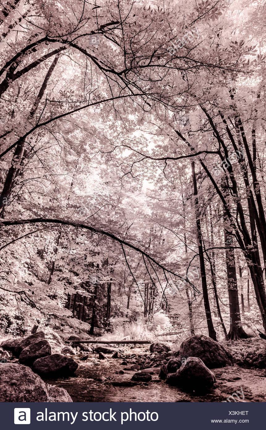 Landschaft im Nationalpark Kalkalpen, Flusstal, Infrarot Aufnahme, Oberösterreich, Österreich Stock Photo