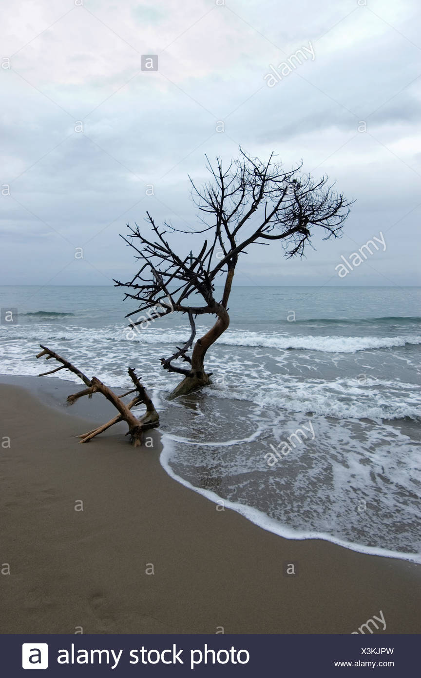 Dead abandoned tree at water's edgy against clouds on a