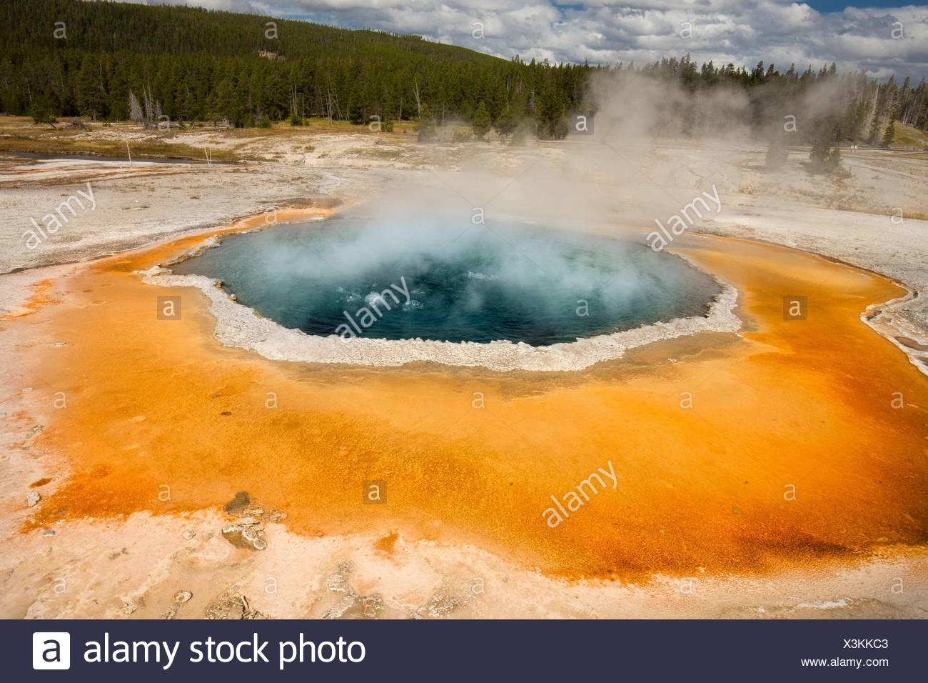 Morning Glory Pool, a hot spring in Upper Geyser Basin of Yellowstone National Park, Wyoming, with steaming water, a white limestone rim, and forest - Stock Image